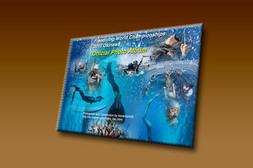 FWC2010_DVD_h3.jpg